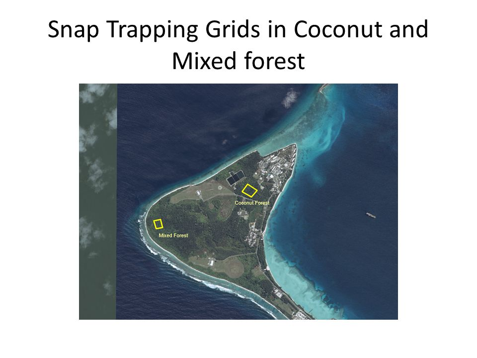 Conclusions The mixed forest grid was trapped out in less time due to a higher density (4x higher) of traps.