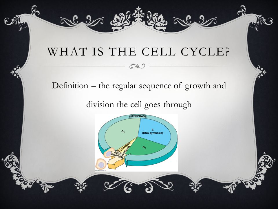 WHAT IS THE CELL CYCLE? Definition – the regular sequence of growth and division the cell goes through
