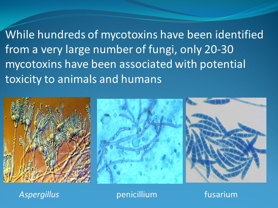 While hundreds of mycotoxins have been identified from a very large number of fungi, only 20-30 mycotoxins have been associated with potential toxicit