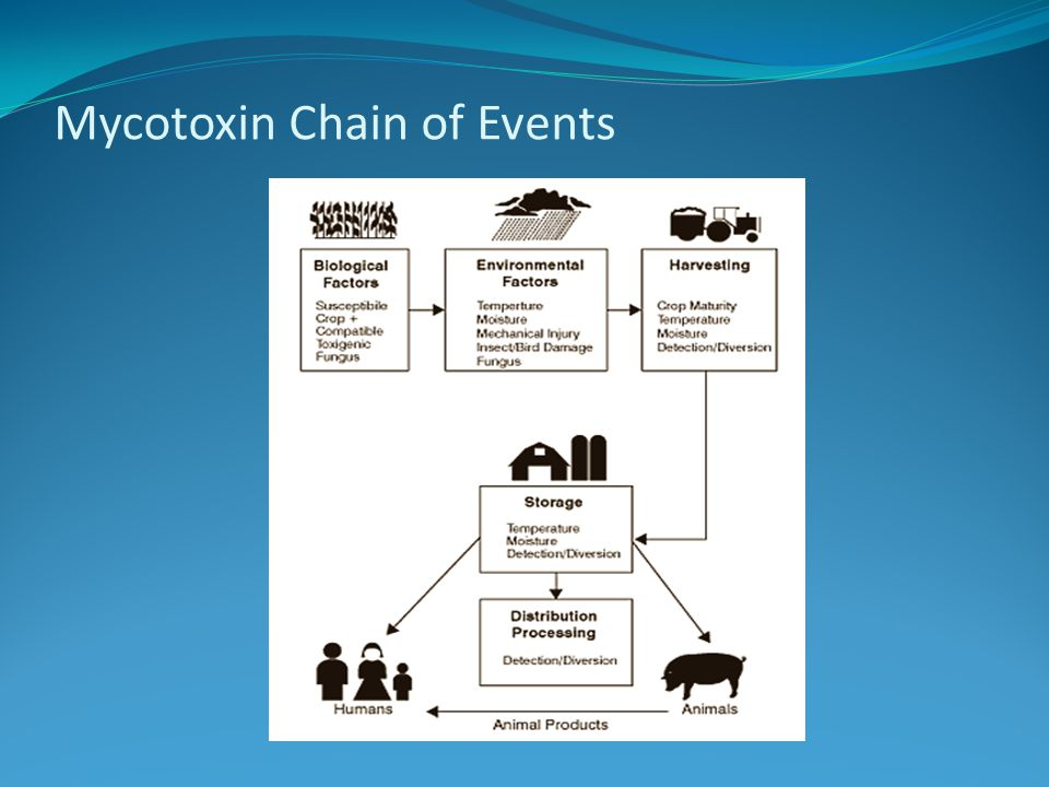 Mycotoxin Chain of Events