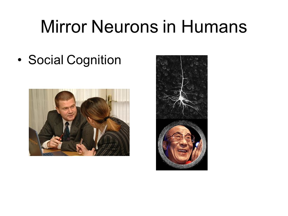 Mirror Neurons in Humans Social Cognition