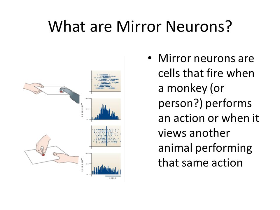 What are Mirror Neurons.