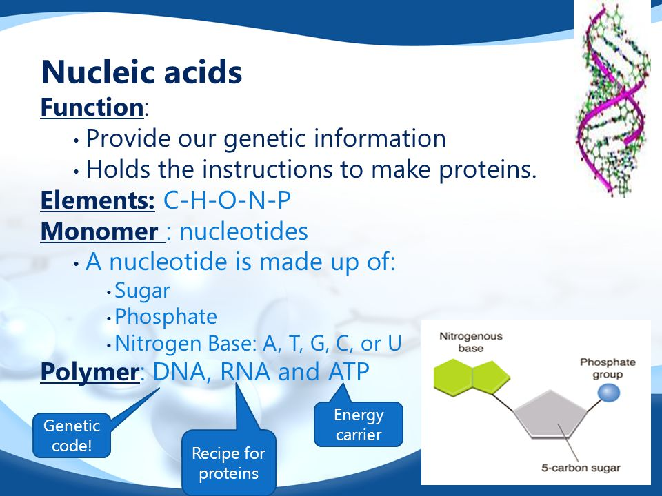 Nucleic acids Function: Provide our genetic information Holds the instructions to make proteins. Elements: C-H-O-N-P Monomer : nucleotides A nucleotid
