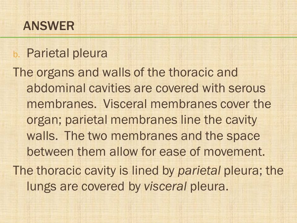 ANSWER b. Parietal pleura The organs and walls of the thoracic and abdominal cavities are covered with serous membranes. Visceral membranes cover the