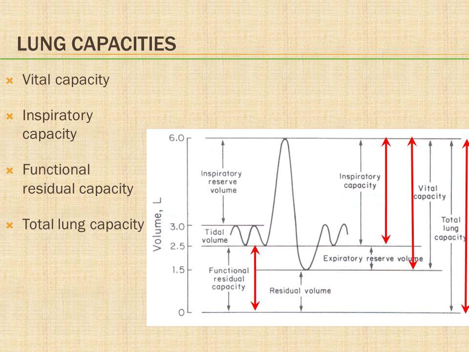 LUNG CAPACITIES  Vital capacity  Inspiratory capacity  Functional residual capacity  Total lung capacity