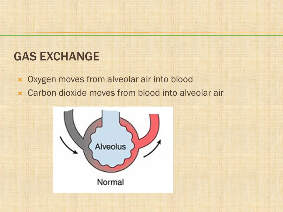 GAS EXCHANGE  Oxygen moves from alveolar air into blood  Carbon dioxide moves from blood into alveolar air