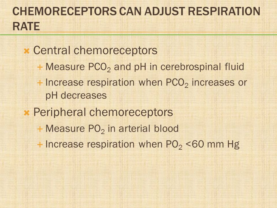 CHEMORECEPTORS CAN ADJUST RESPIRATION RATE  Central chemoreceptors  Measure PCO 2 and pH in cerebrospinal fluid  Increase respiration when PCO 2 increases or pH decreases  Peripheral chemoreceptors  Measure PO 2 in arterial blood  Increase respiration when PO 2 <60 mm Hg