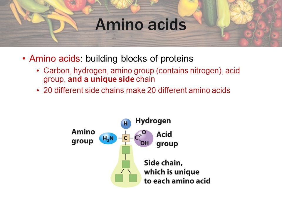 Amino acids link to form proteins We obtain amino acids from eating plant and animal foods.