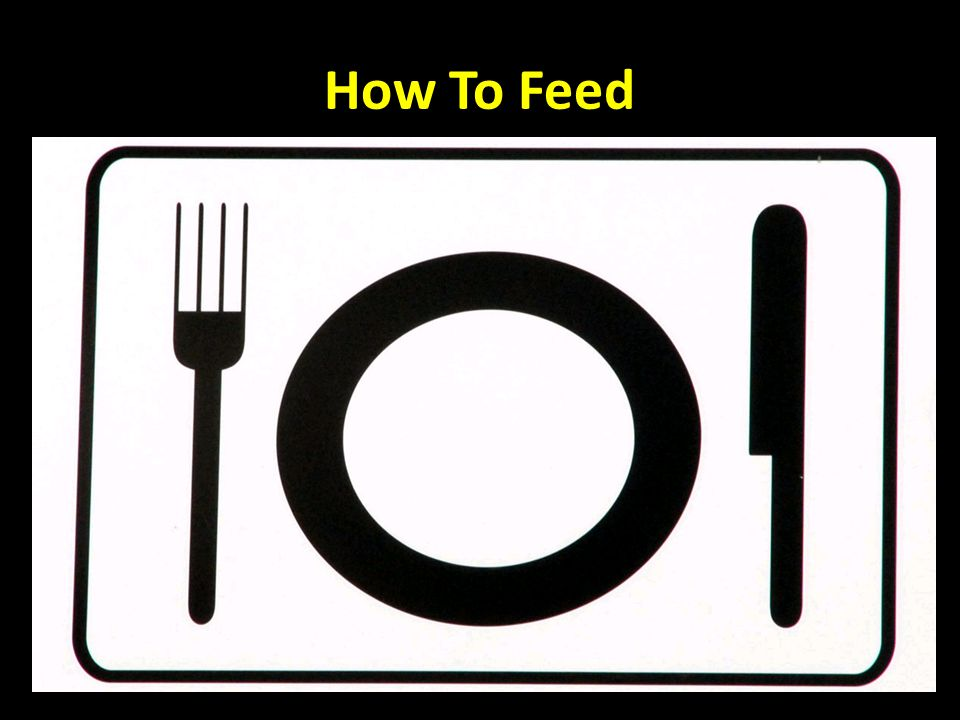 How To Feed