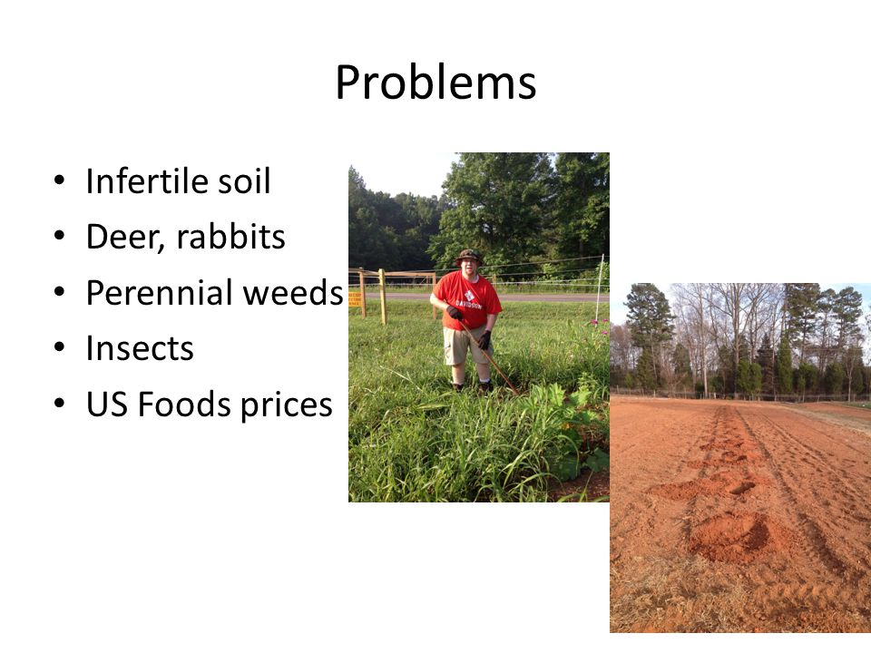 Problems Infertile soil Deer, rabbits Perennial weeds Insects US Foods prices