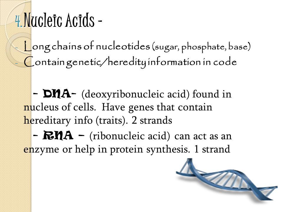 4. Nucleic Acids – - Long chains of nucleotides (sugar, phosphate, base) - Contain genetic/heredity information in code - DNA- (deoxyribonucleic acid)