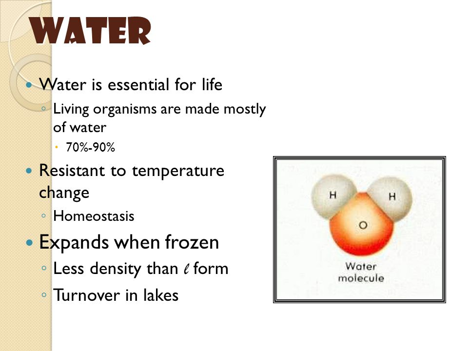 Water Water is essential for life ◦ Living organisms are made mostly of water  70%-90% Resistant to temperature change ◦ Homeostasis Expands when frozen ◦ Less density than l form ◦ Turnover in lakes