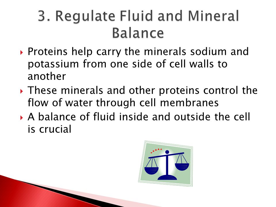  Proteins help carry the minerals sodium and potassium from one side of cell walls to another  These minerals and other proteins control the flow of water through cell membranes  A balance of fluid inside and outside the cell is crucial