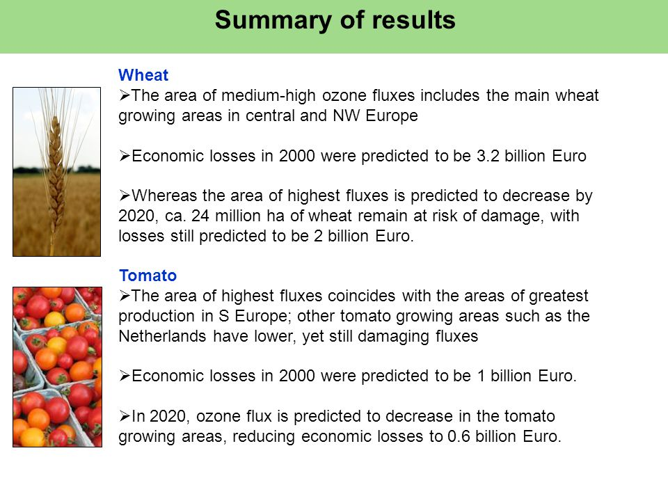Summary of results Wheat  The area of medium-high ozone fluxes includes the main wheat growing areas in central and NW Europe  Economic losses in 2000 were predicted to be 3.2 billion Euro  Whereas the area of highest fluxes is predicted to decrease by 2020, ca.