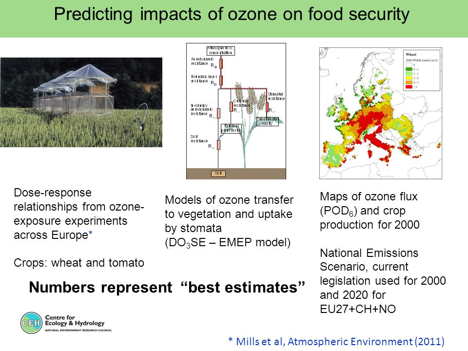 Predicting impacts of ozone on food security Dose-response relationships from ozone- exposure experiments across Europe* Crops: wheat and tomato Model