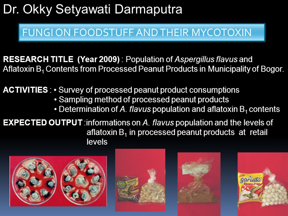 RESEARCH TITLE (Year 2009) : Population of Aspergillus flavus and Aflatoxin B 1 Contents from Processed Peanut Products in Municipality of Bogor. ACTI