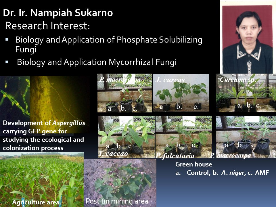 Research Interest:  Biology and Application of Phosphate Solubilizing Fungi  Biology and Application Mycorrhizal Fungi Dr. Ir. Nampiah Sukarno Devel