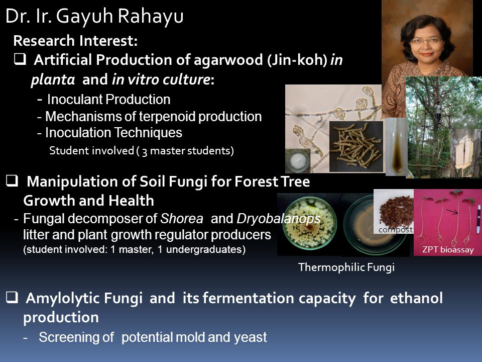 Dr. Ir. Gayuh Rahayu Research Interest:  Artificial Production of agarwood (Jin-koh) in planta and in vitro culture: - Inoculant Production - Mechani