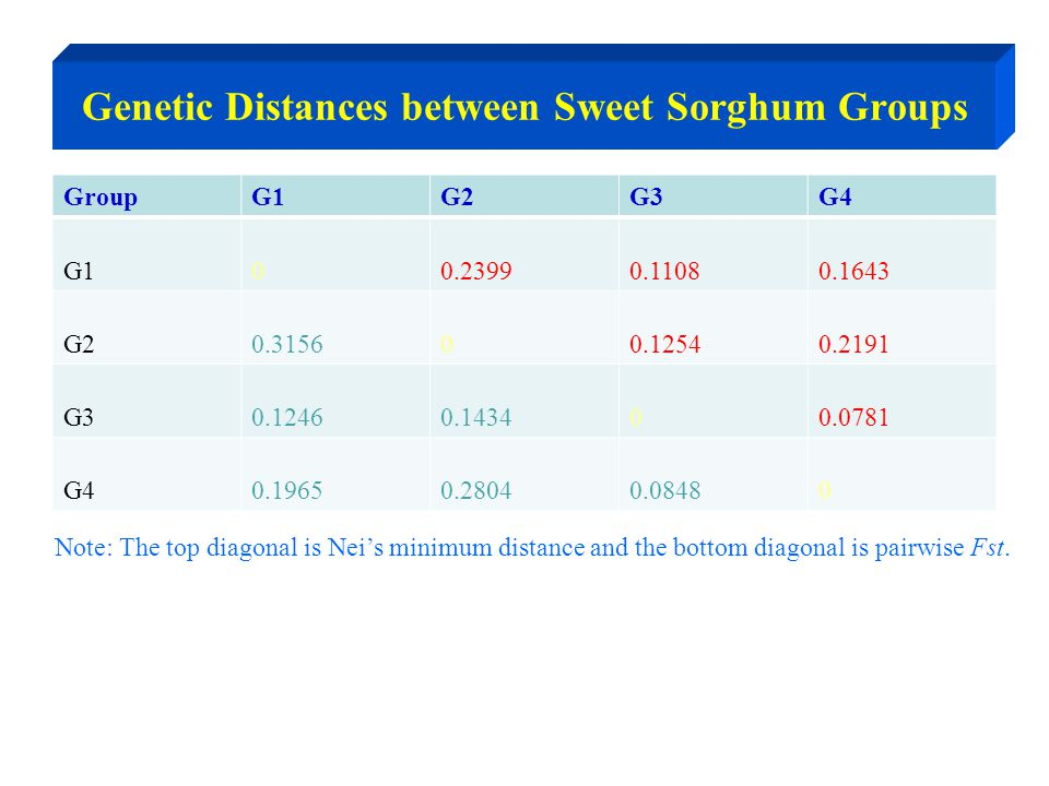 Genetic Distances between Sweet Sorghum Groups GroupG1G2G3G4 G100.23990.11080.1643 G20.315600.12540.2191 G30.12460.143400.0781 G40.19650.28040.08480 Note: The top diagonal is Nei's minimum distance and the bottom diagonal is pairwise Fst.