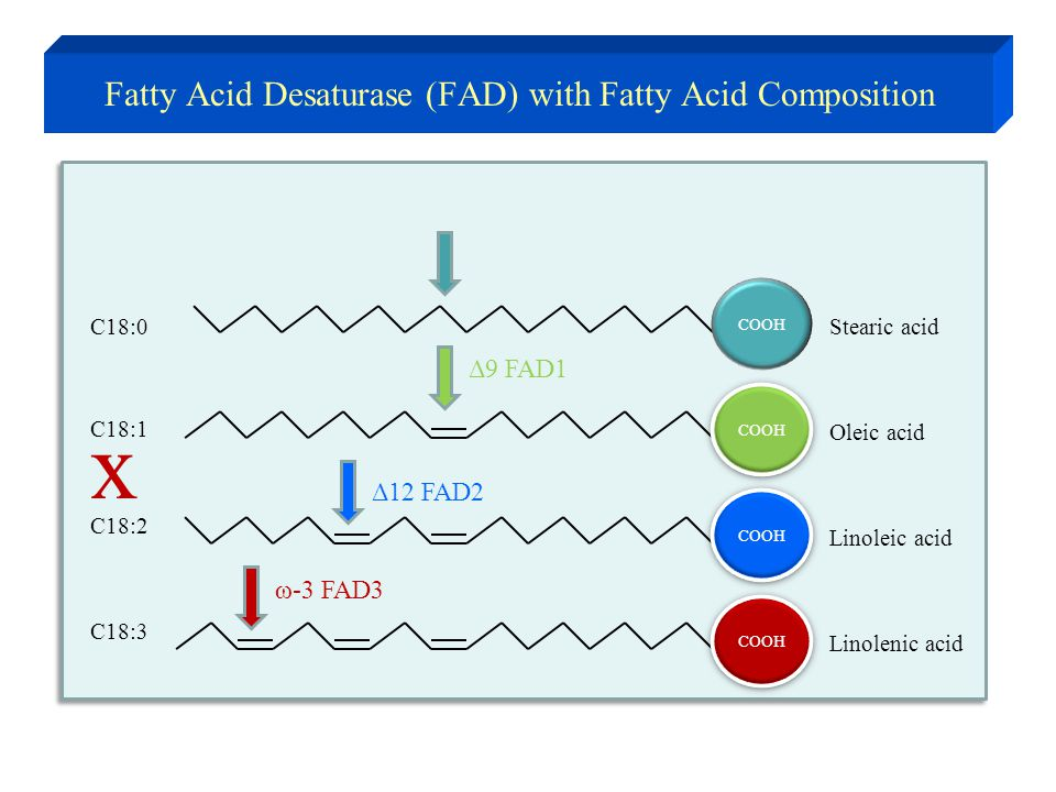 Stearic acidC18:0 COOH Oleic acid COOH C18:1 COOH Linoleic acid C18:2 COOH Linolenic acid C18:3 Fatty Acid Desaturase (FAD) with Fatty Acid Compositio