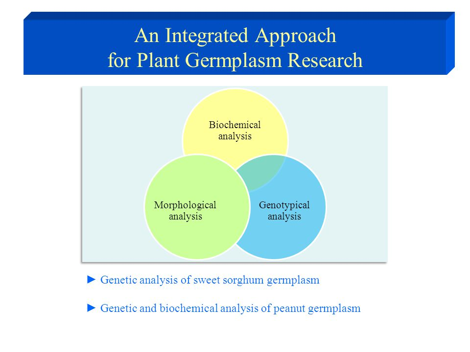 An Integrated Approach for Plant Germplasm Research ► Genetic analysis of sweet sorghum germplasm ► Genetic and biochemical analysis of peanut germpla