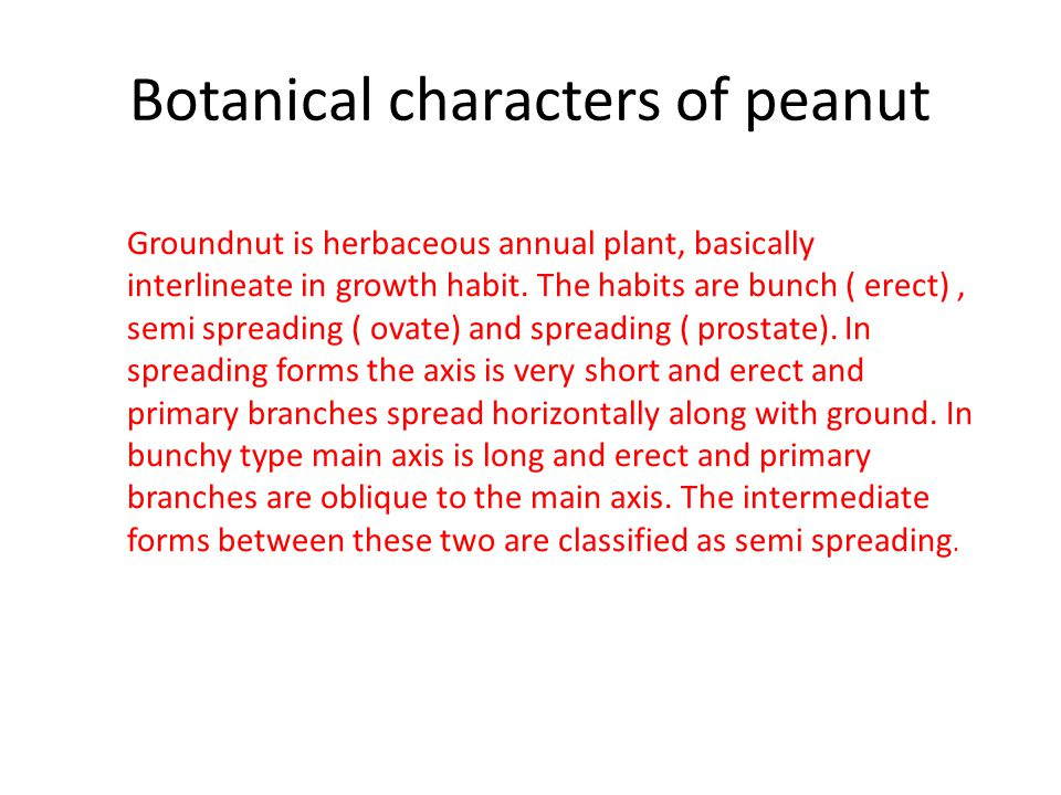 Botanical characters of peanut Groundnut is herbaceous annual plant, basically interlineate in growth habit.