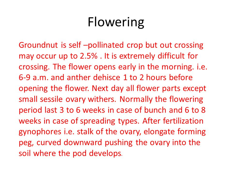 Flowering Groundnut is self –pollinated crop but out crossing may occur up to 2.5%.