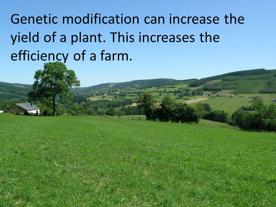 Genetic modification can increase the yield of a plant. This increases the efficiency of a farm.