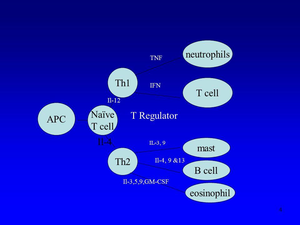 APC Th1 neutrophils T cell Th2 mast B cell eosinophil Naïve T cell Il-4 Il-12 TNF IFN T Regulator IL-3, 9 Il-4, 9 &13 Il-3,5,9,GM-CSF 4