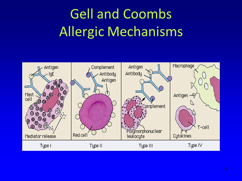 Gell and Coombs Allergic Mechanisms 9