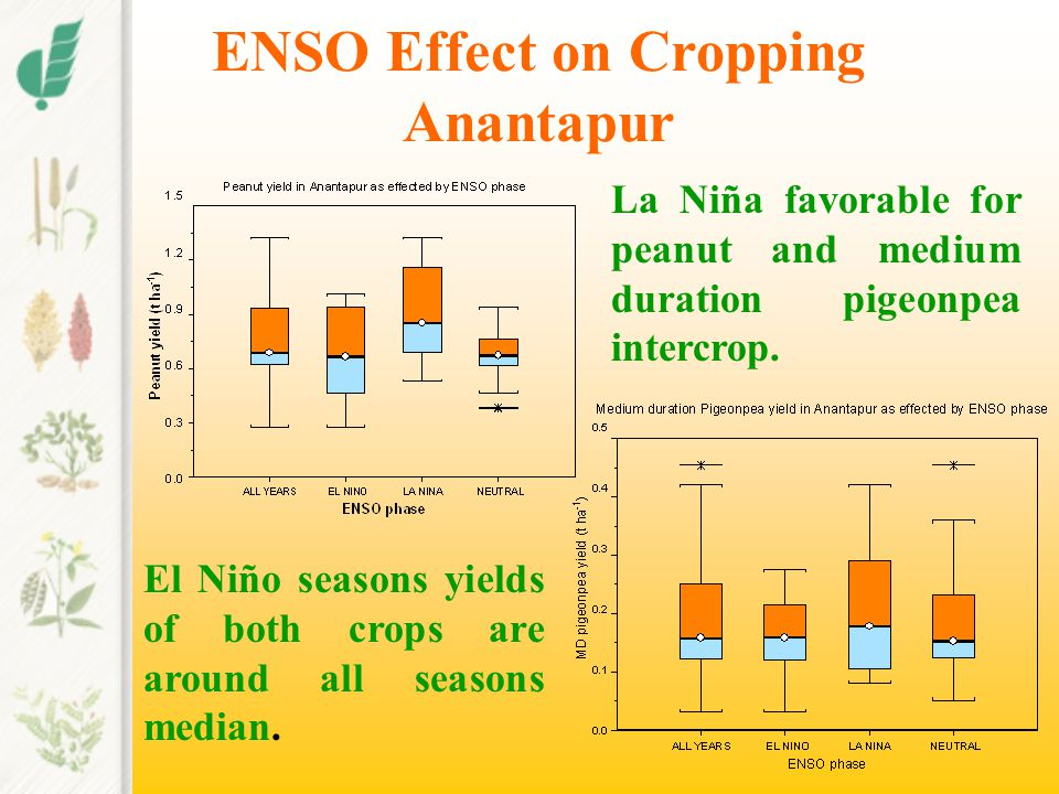 ENSO Effect on Cropping Anantapur La Niña favorable for peanut and medium duration pigeonpea intercrop. El Niño seasons yields of both crops are aroun