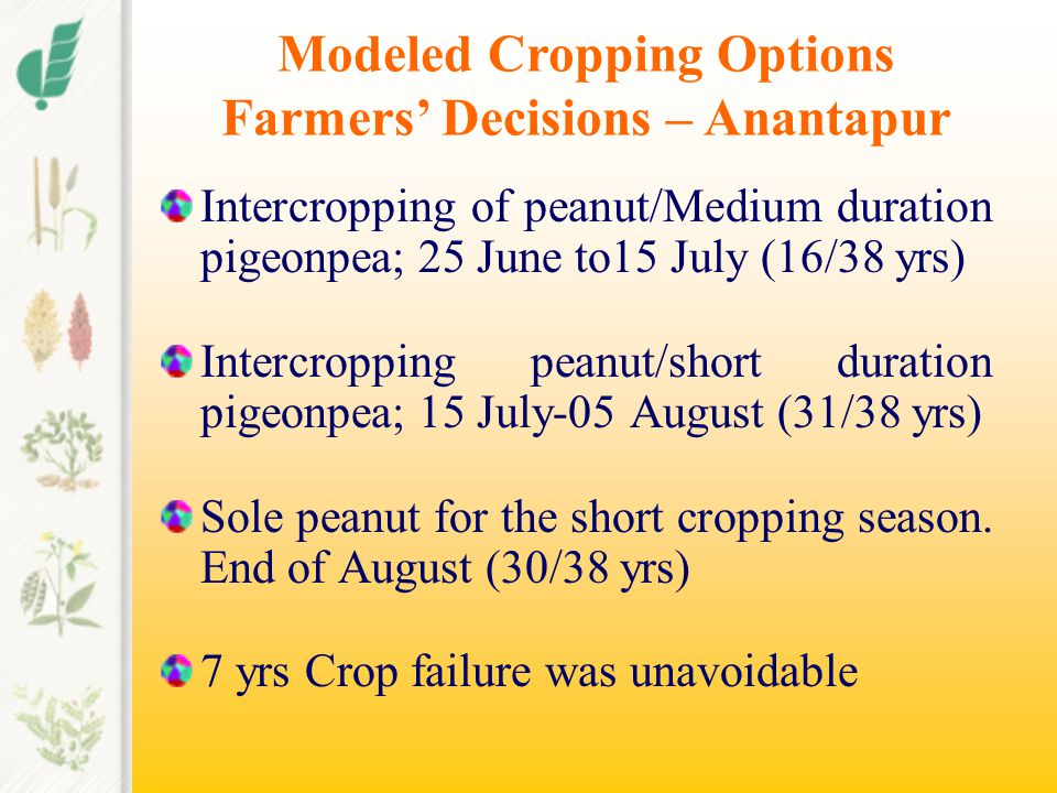 Intercropping of peanut/Medium duration pigeonpea; 25 June to15 July (16/38 yrs) Intercropping peanut/short duration pigeonpea; 15 July-05 August (31/