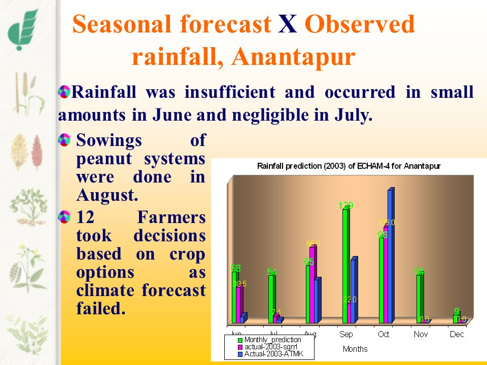 Seasonal forecast X Observed rainfall, Anantapur Sowings of peanut systems were done in August. 12 Farmers took decisions based on crop options as cli