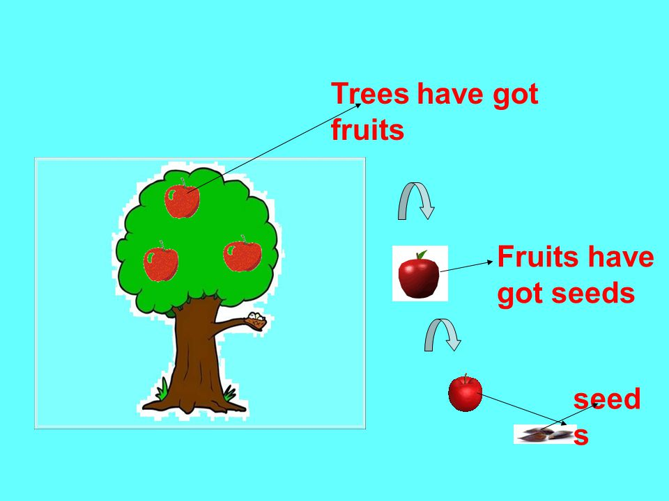 Trees have got fruits Fruits have got seeds seed s
