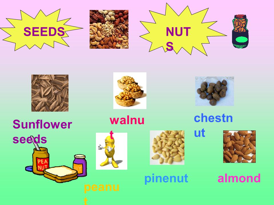 SEEDSNUT S Sunflower seeds walnu t chestn ut peanu t pinenutalmond