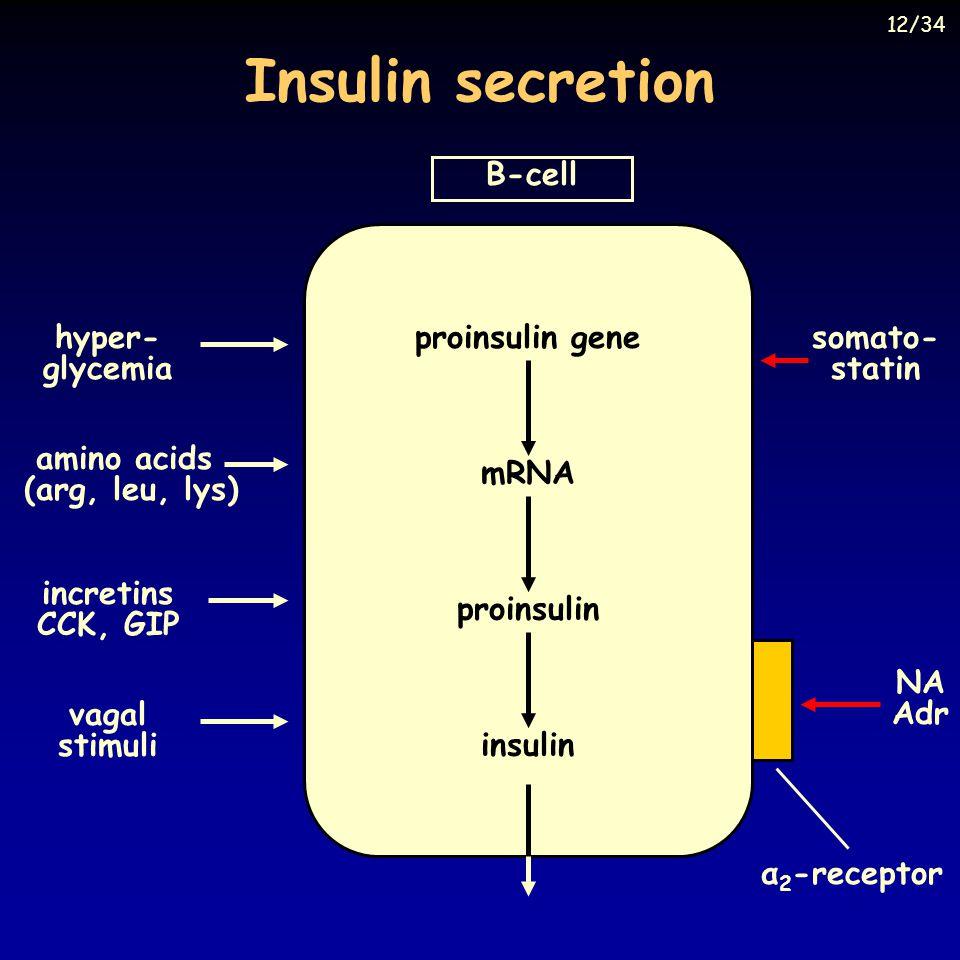 Insulin secretion B-cell incretins CCK, GIP hyper- glycemia amino acids (arg, leu, lys) vagal stimuli α 2 -receptor somato- statin NA Adr proinsulin gene mRNA proinsulin insulin 12/34