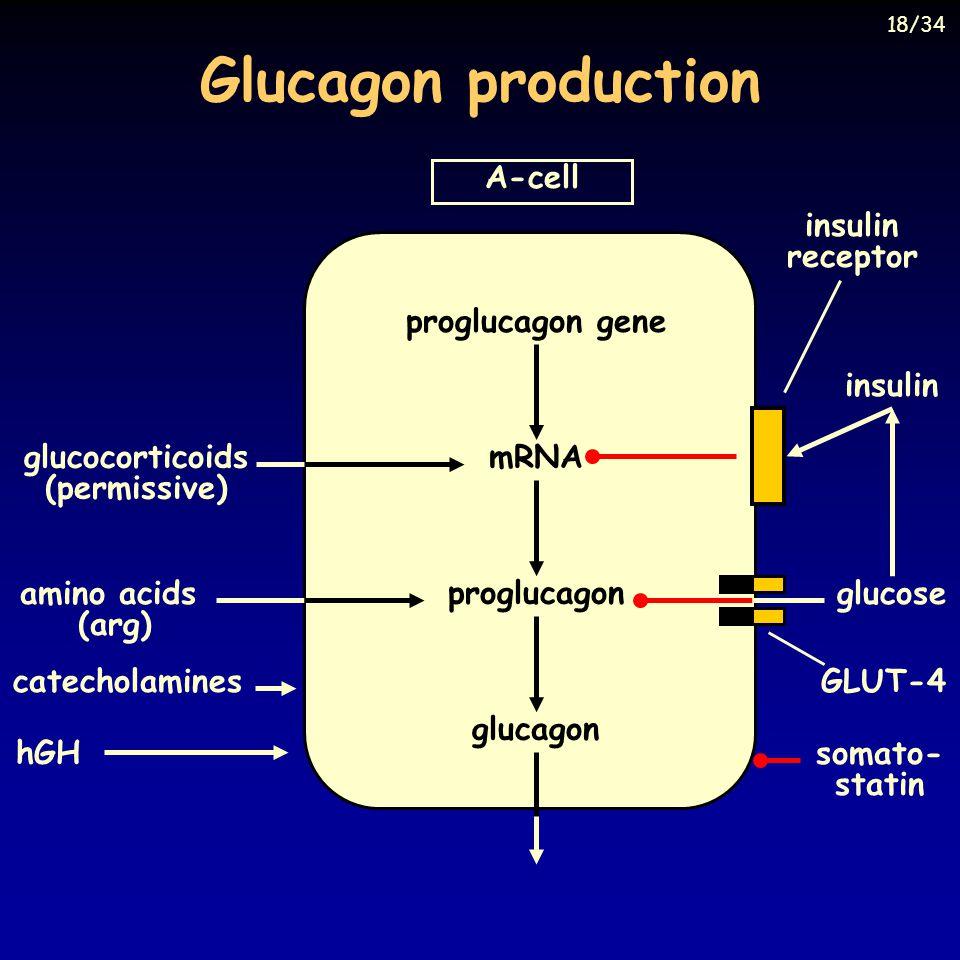 Glucagon production A-cell proglucagon gene mRNA proglucagon glucagon catecholamines hGH glucocorticoids (permissive) insulin receptor insulin GLUT-4 amino acids (arg) glucose somato- statin 18/34