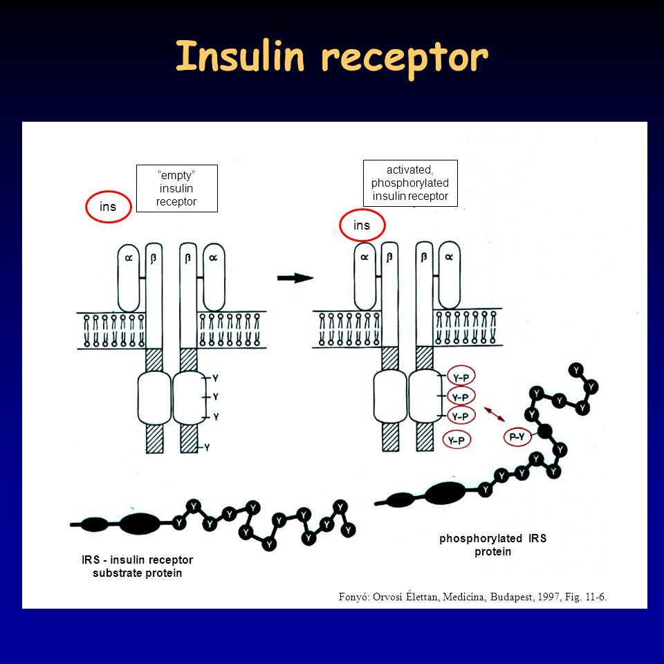 Insulin receptor Fonyó: Orvosi Élettan, Medicina, Budapest, 1997, Fig.