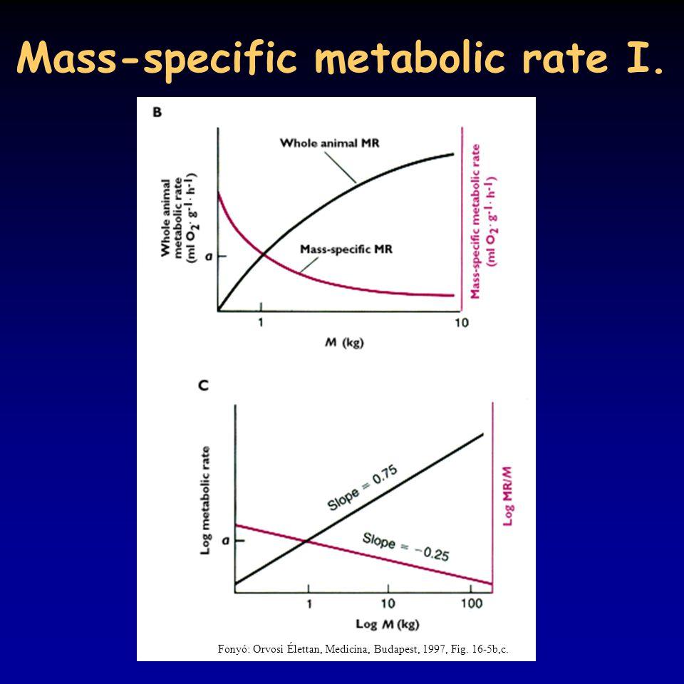 Mass-specific metabolic rate I. Fonyó: Orvosi Élettan, Medicina, Budapest, 1997, Fig. 16-5b,c.