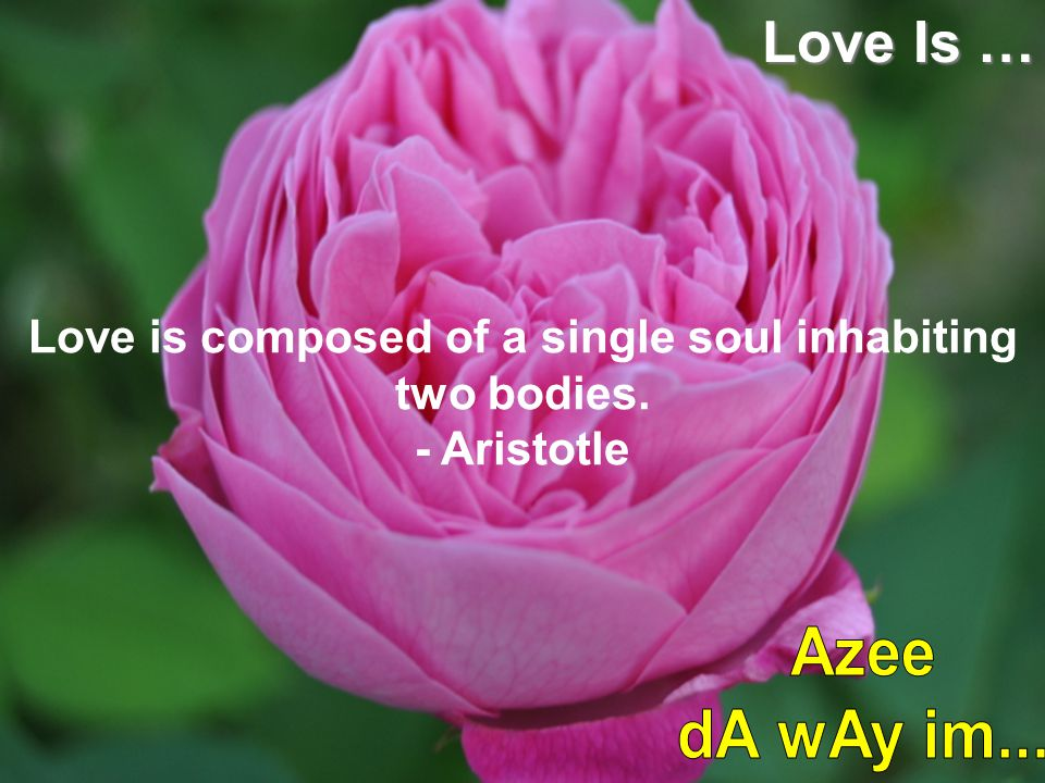 Love is composed of a single soul inhabiting two bodies. - Aristotle Love Is …