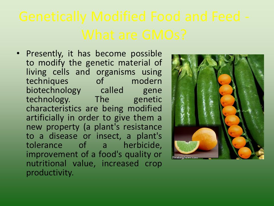 Genetically Modified Food and Feed - What are GMOs? Presently, it has become possible to modify the genetic material of living cells and organisms usi