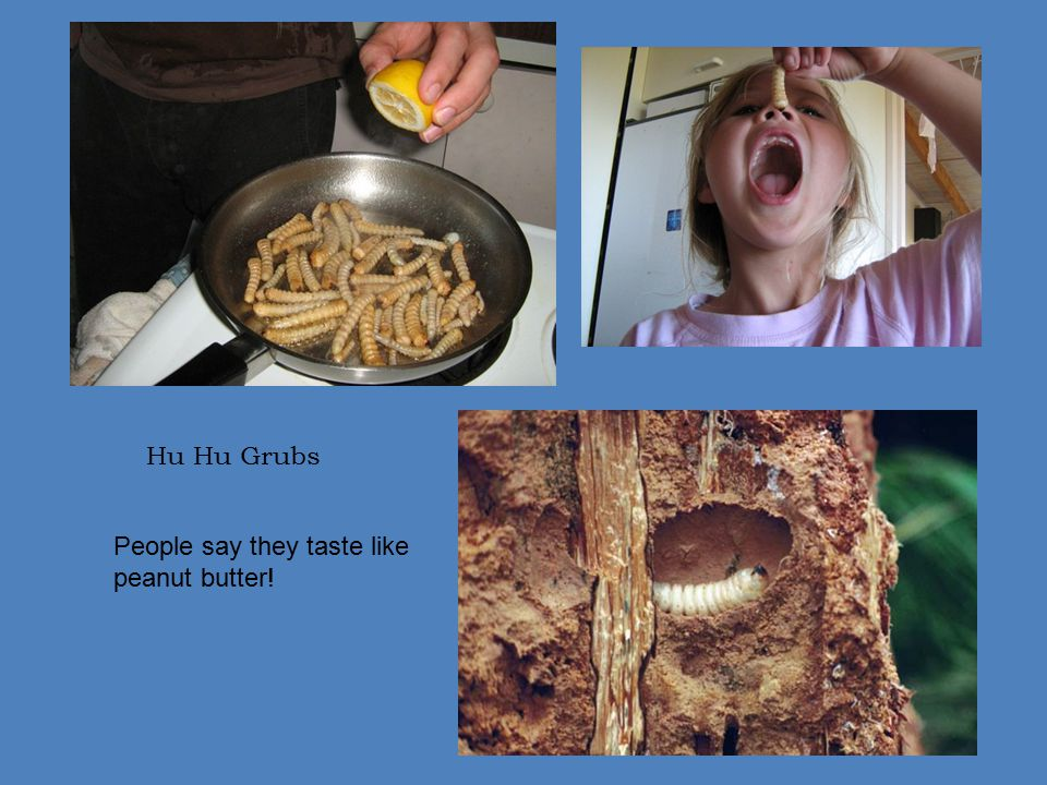 Hu Hu Grubs People say they taste like peanut butter!