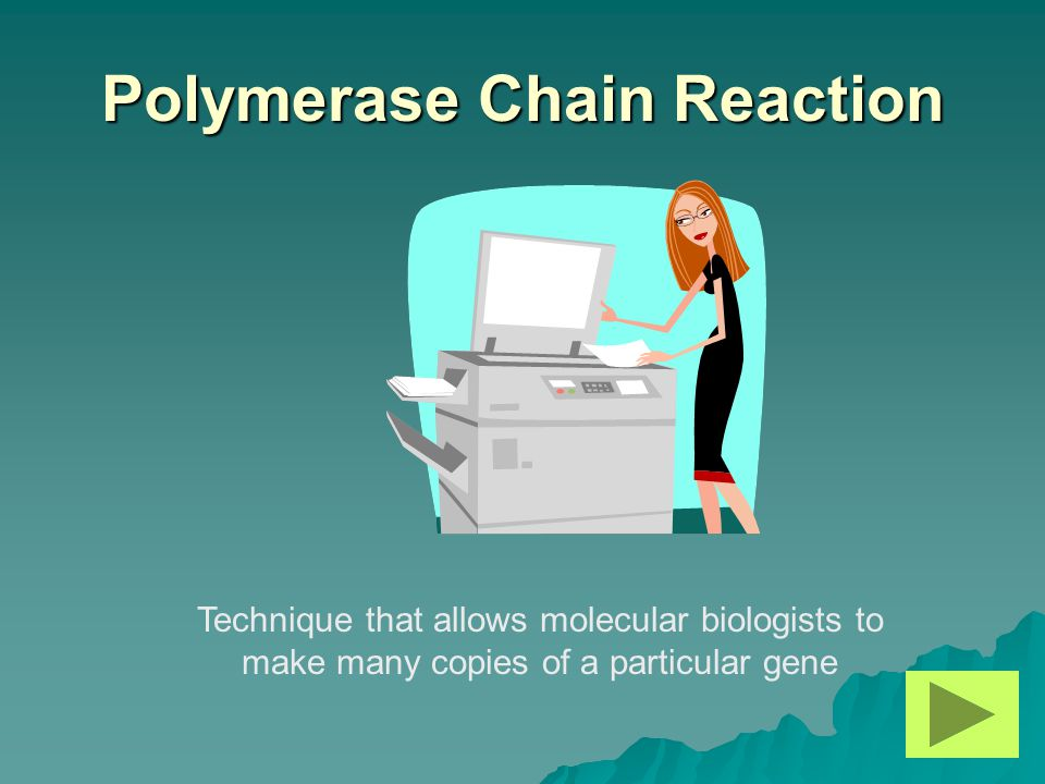 Polymerase Chain Reaction Technique that allows molecular biologists to make many copies of a particular gene