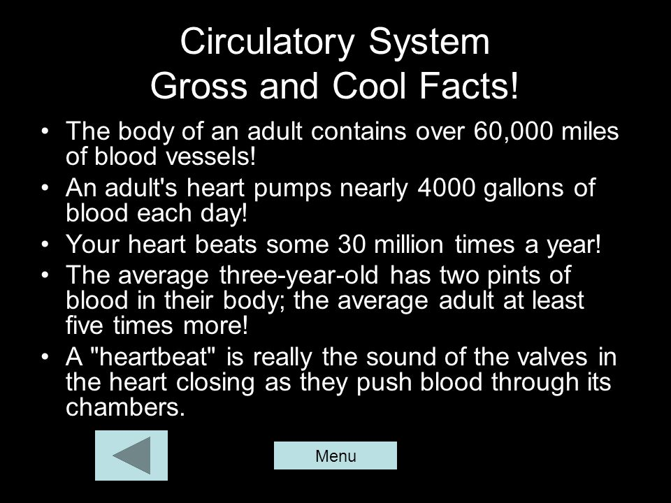 Circulatory System Gross and Cool Facts! The body of an adult contains over 60,000 miles of blood vessels! An adult's heart pumps nearly 4000 gallons