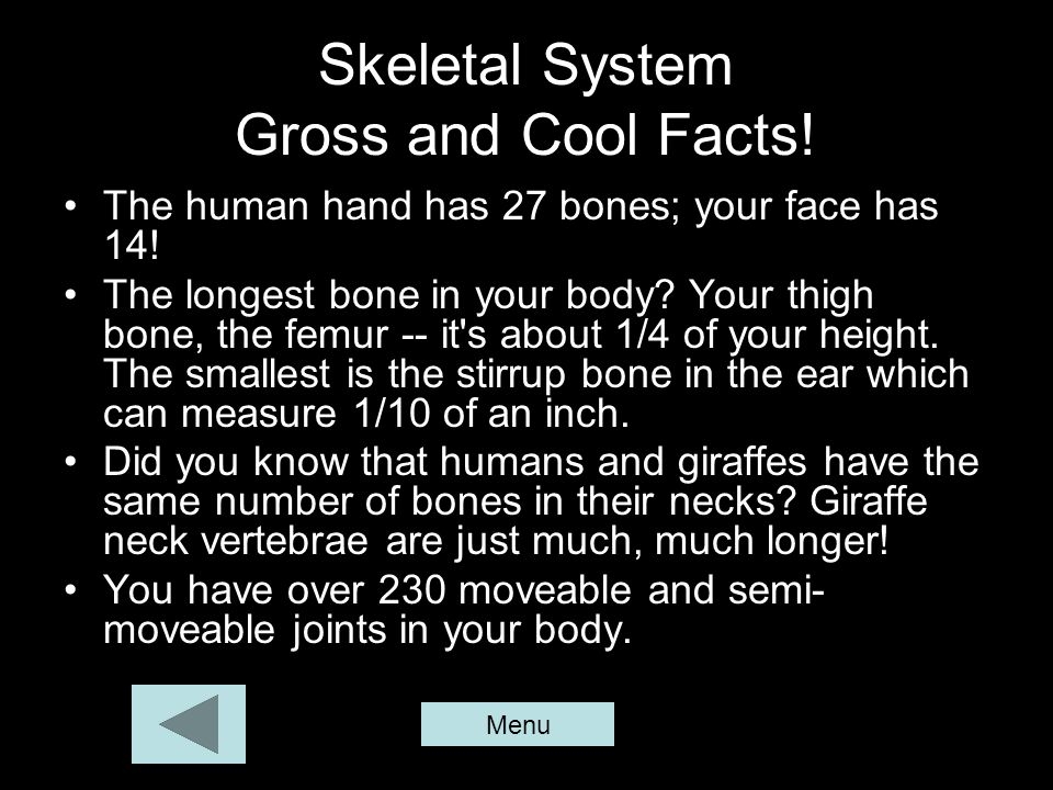 Skeletal System Gross and Cool Facts! The human hand has 27 bones; your face has 14! The longest bone in your body? Your thigh bone, the femur -- it's