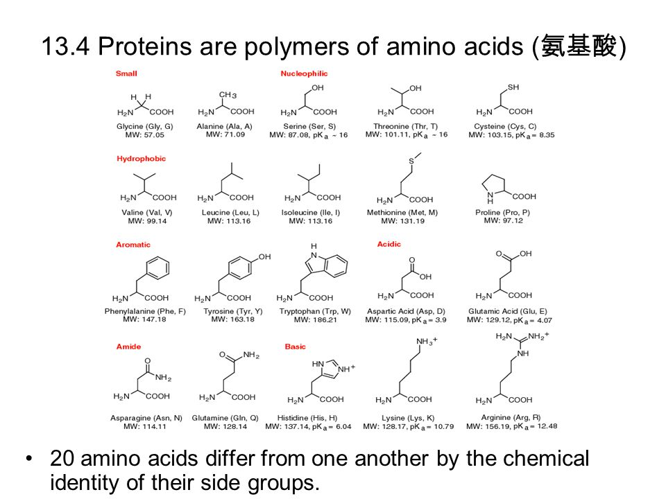 13.4 Proteins are polymers of amino acids ( 氨基酸 ) 20 amino acids differ from one another by the chemical identity of their side groups.