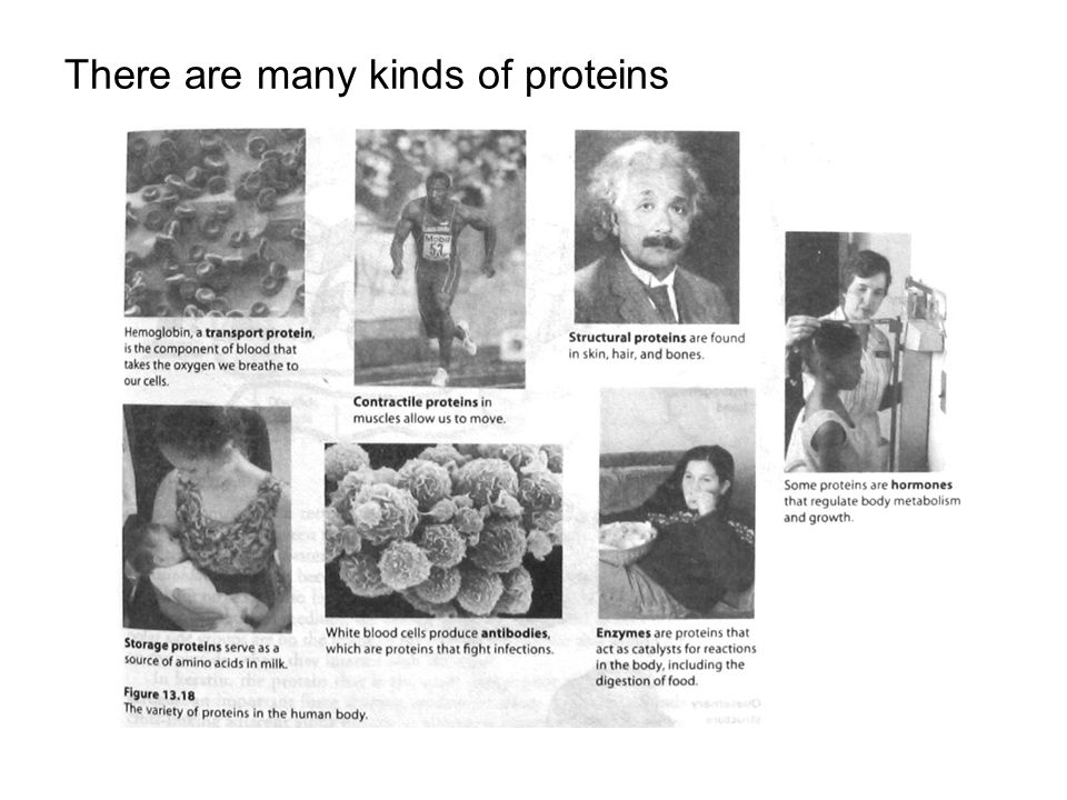 There are many kinds of proteins