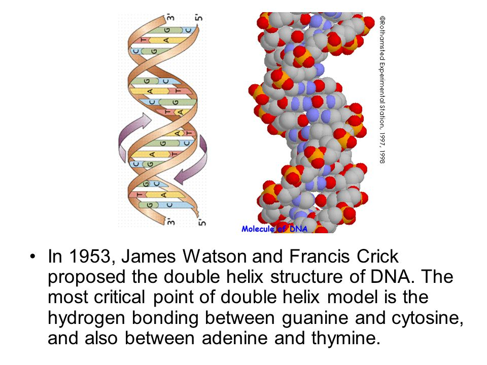 In 1953, James Watson and Francis Crick proposed the double helix structure of DNA.