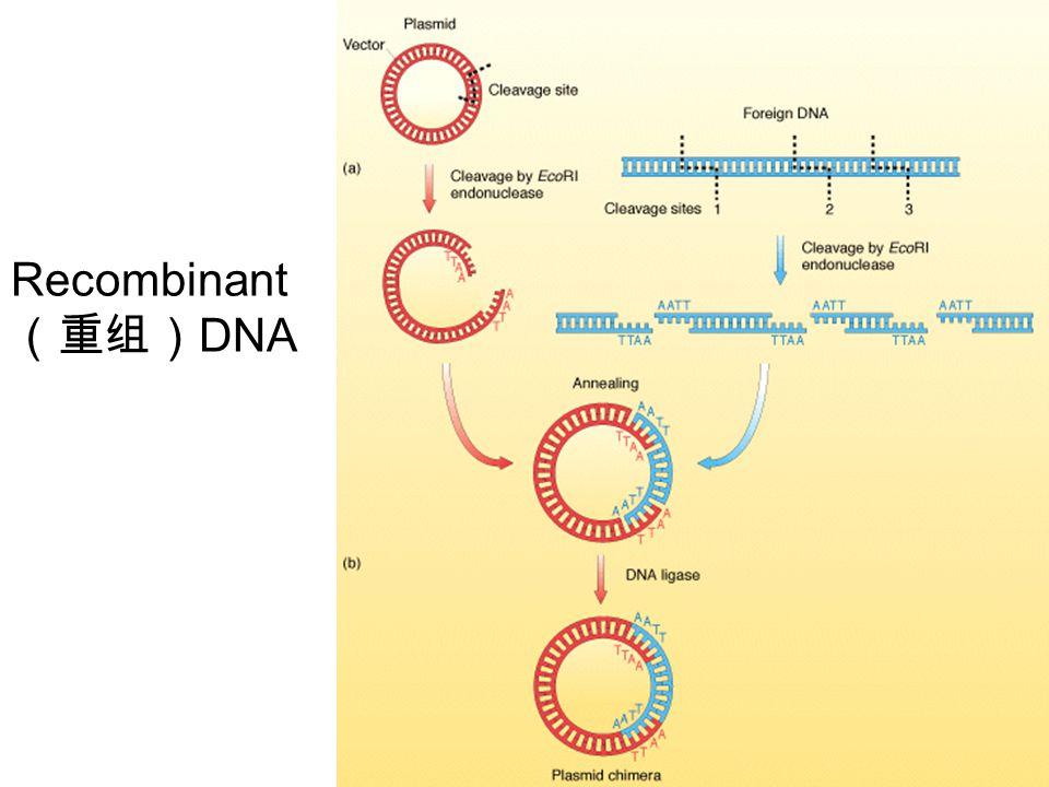Recombinant (重组) DNA