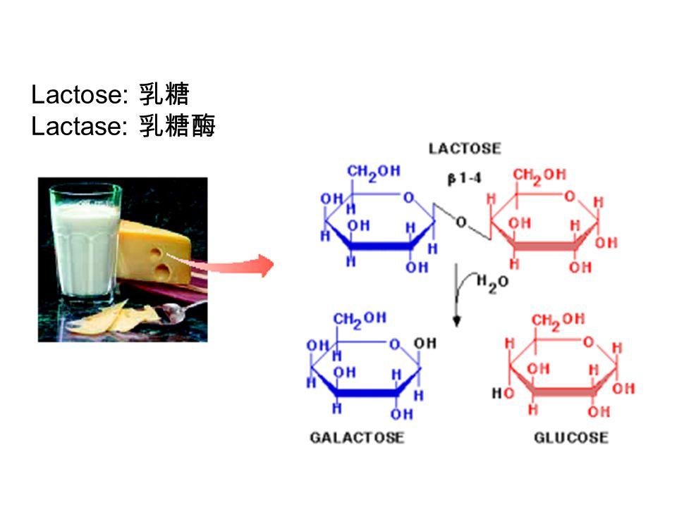 Polysaccharides ( 多糖 ) are complex carbohydrates Hyaluronic acid: 透明质酸 Glucuronic acid: 葡萄醛酸 Chitin: 甲壳素